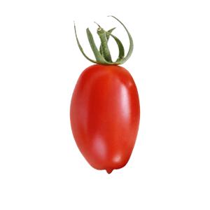 pomodorino-pachino-bollo-bianco